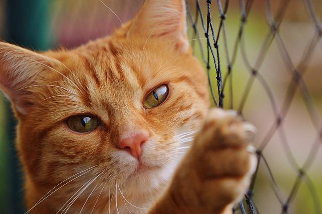 cat-1044750_640