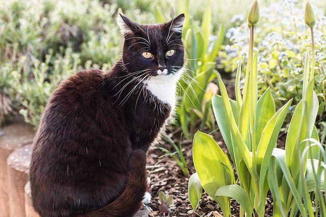 cat-3240319_640