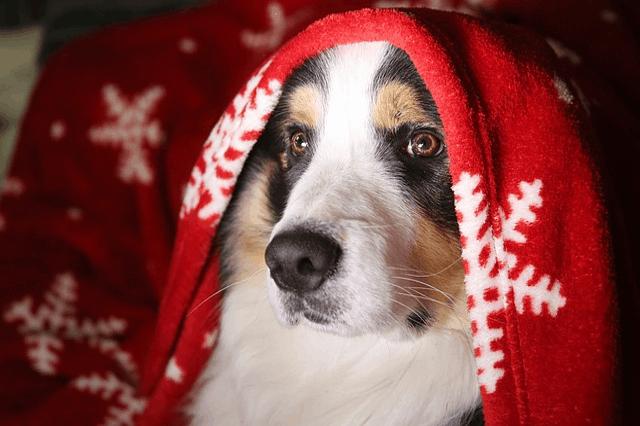 dog-3029701_640