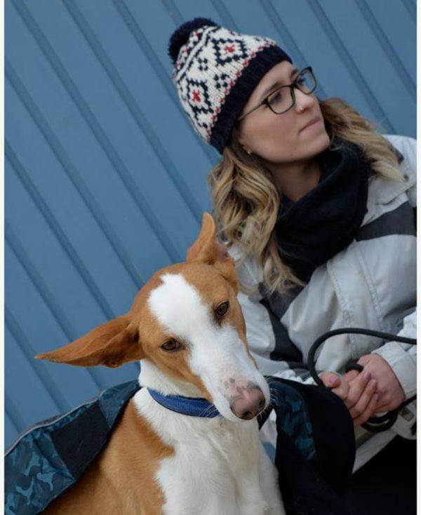Spandy Perros en Adopcion Yecla Alexa 8 (1)
