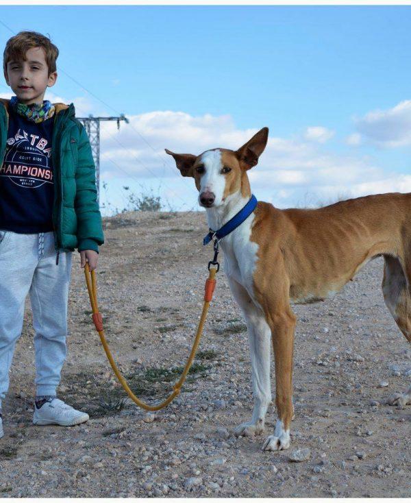 Spandy Perros en Adopcion Yecla Alexa 8 (7)