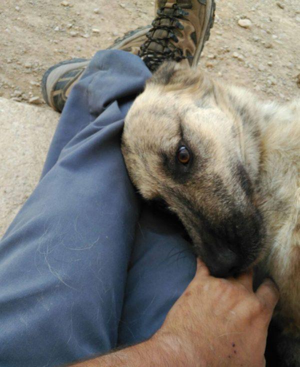 Spandy Perros en Adopcion Yecla Balto 9