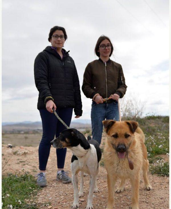 Spandy Perros en Adopcion Yecla Guinda 3