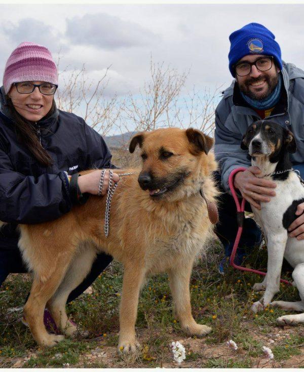 Spandy Perros en Adopcion Yecla Guinda 4