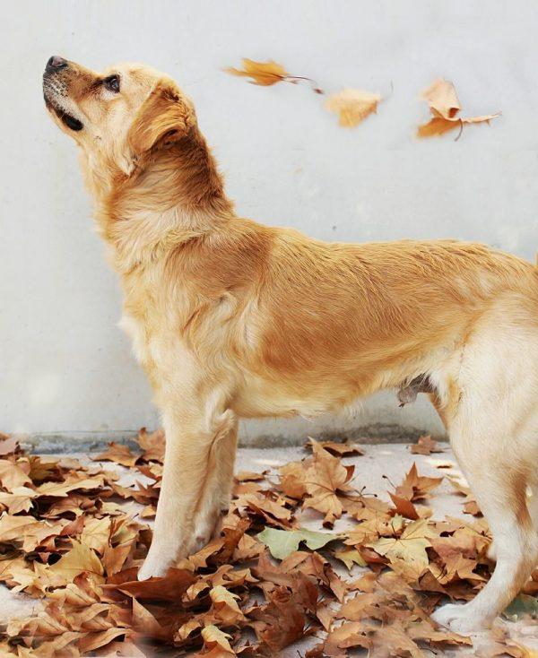 Spandy Perros en Adopcion Yecla Piki 5