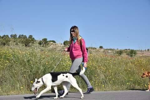 Spandy Perros en Adopcion Yecla Energy 2