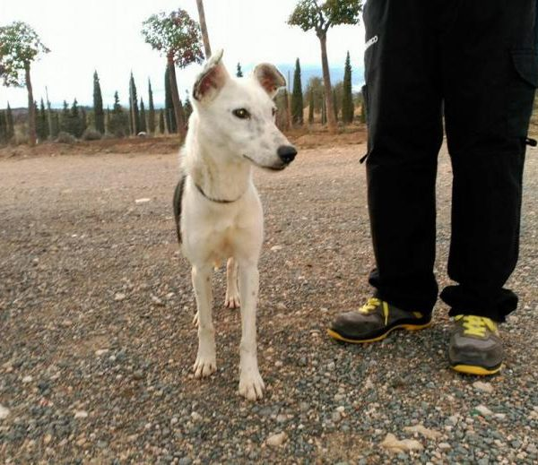 Spandy Perros en Adopcion Yecla Energy 3