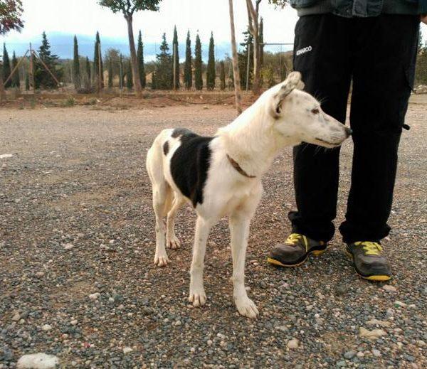 Spandy Perros en Adopcion Yecla Energy 5