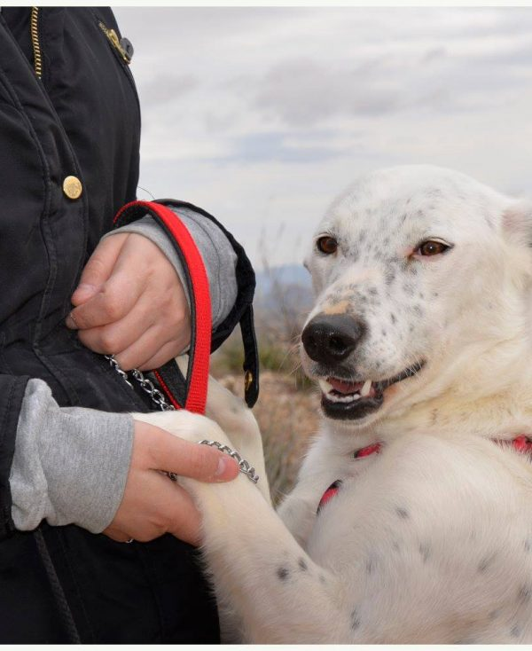 Spandy Perros en Adopcion Yecla Energy 7