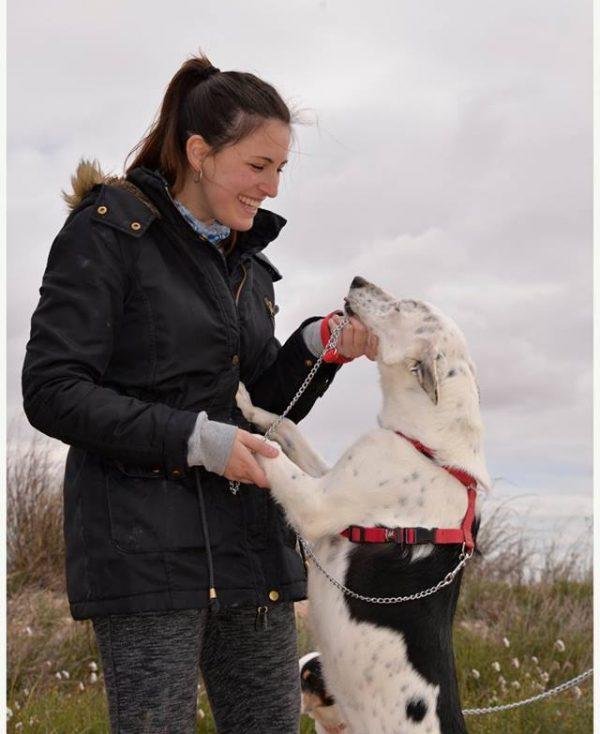 Spandy Perros en Adopcion Yecla Energy 8