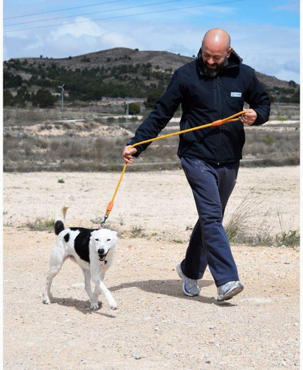 Spandy Perros en Adopcion Yecla Energy 9