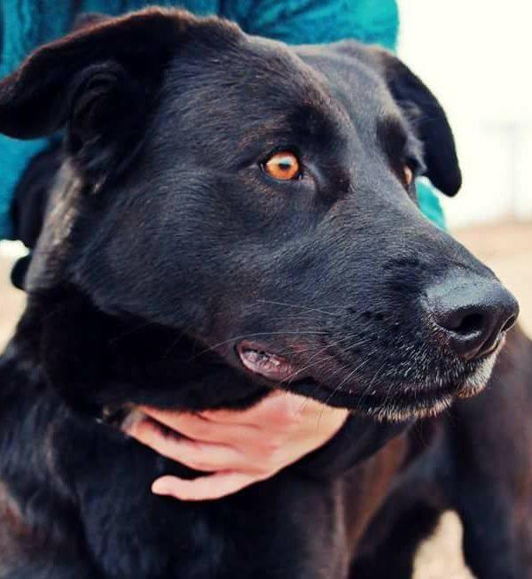 Spandy-Perros-en-adopcion-Yecla-Arya-1