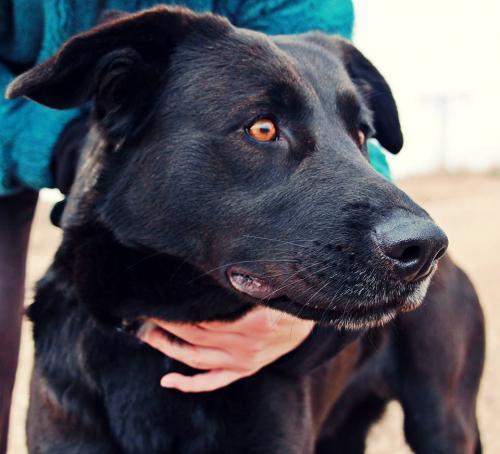 Spandy-Perros-en-adopcion-Yecla-Arya-3