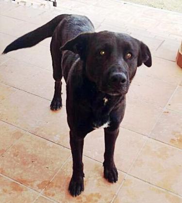 Spandy-Perros-en-adopcion-Yecla-Arya-5
