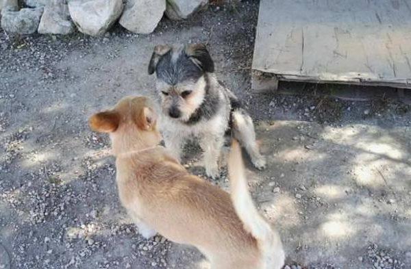 Spandy-Perros-en-adopcion-Yecla-Coco-Flor-2