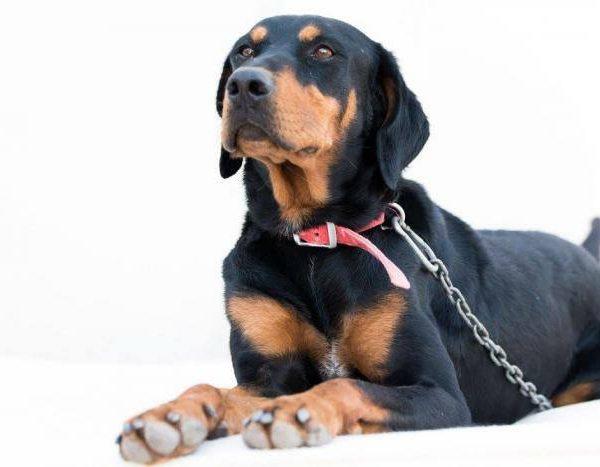 Spandy-Perros-en-adopcion-Yecla-Gonzo-2