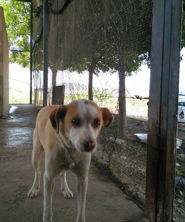 Spandy-Perros-en-adopcion-Yecla-Lina-9