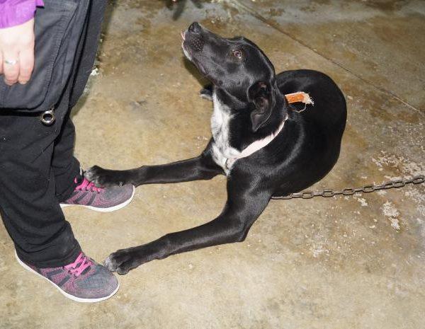 Spandy-Perros-en-adopcion-Yecla-Margo-10