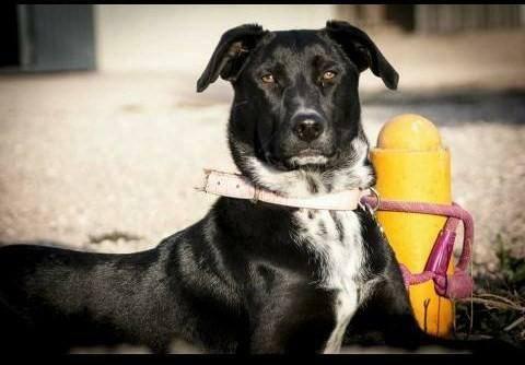 Spandy-Perros-en-adopcion-Yecla-Margo-3