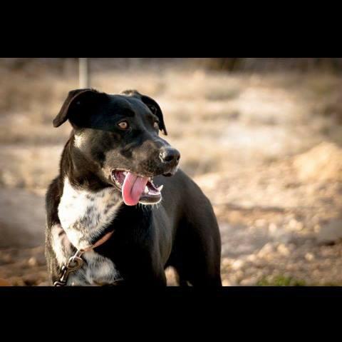 Spandy-Perros-en-adopcion-Yecla-Margo-4