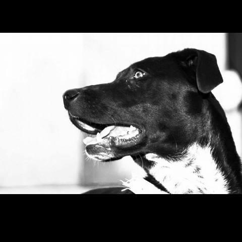 Spandy-Perros-en-adopcion-Yecla-Margo-5