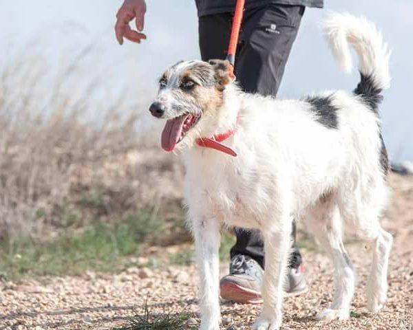 Spandy-Perros-en-adopcion-Yecla-Neron-1