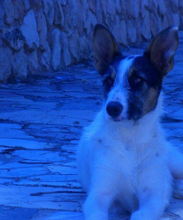 Spandy-Perros-en-adopcion-Yecla-Neron-4