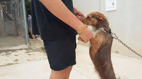 Spandy-Perros-en-adopcion-Yecla-Rasta-4