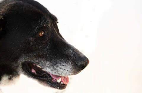 Spandy-Perros-en-adopcion-Yecla-Reina-10