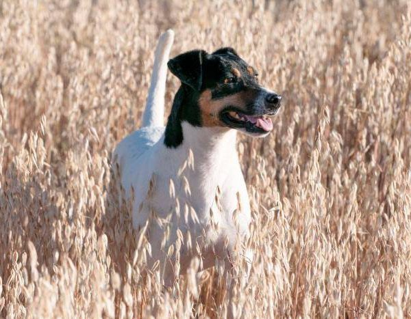Spandy-Perros-en-adopcion-Yecla-Smaug-1