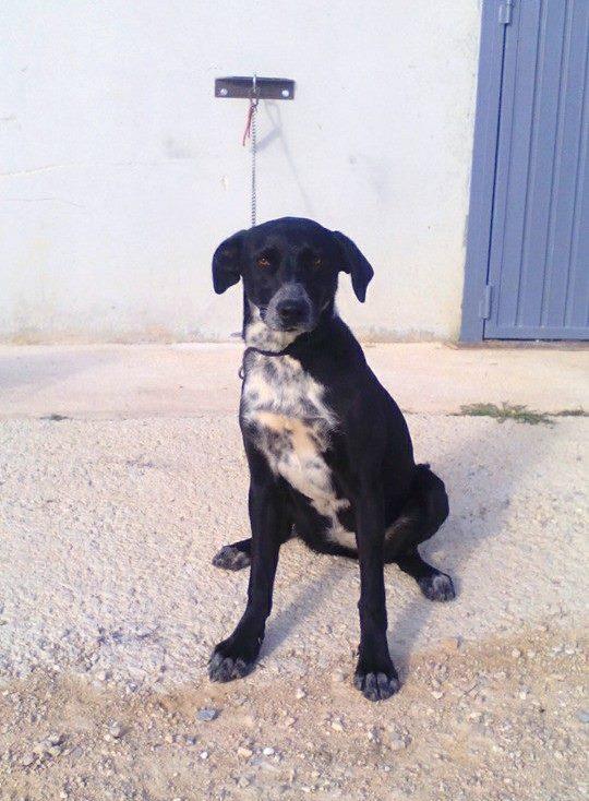 Spandy-Perros-en-adopcion-Yecla-Venus-4