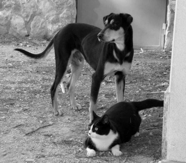 Spandy-Perros-en-adopcion-Yecla-Viernes-3