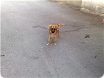 Spandy-Perros-en-adopcion-Yecla-nico-1