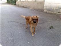 Spandy-Perros-en-adopcion-Yecla-nico-2