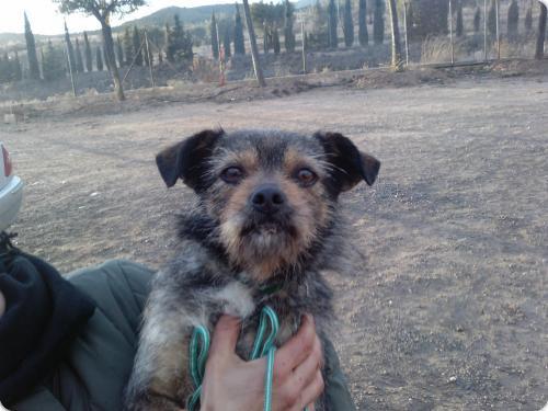 Spandy-Perros-en-adopcion-Yecla-yako-1